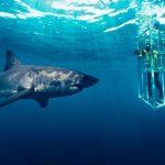 Shark Cage Diving at The Kosher Safari